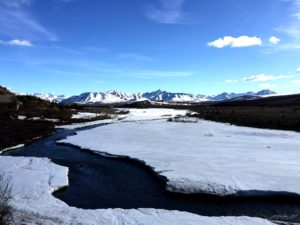 Savage River - Denali National Park